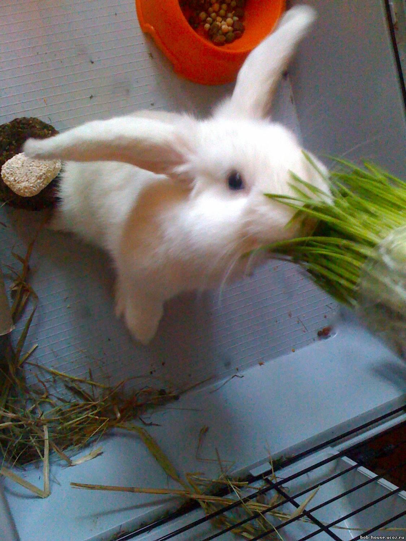 Как приготовить кролика чтобы мясо было мягким и сочным 92